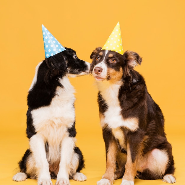 Cute sitting dogs with hats Free Photo