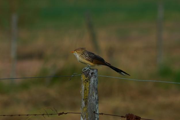 Piccolo uccello sveglio che si siede su un filo spinato Foto Gratuite