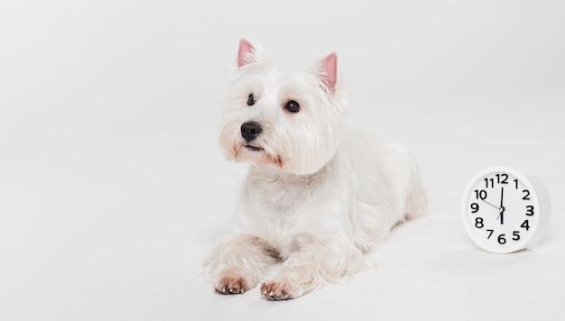 Cute small dog sitting Free Photo
