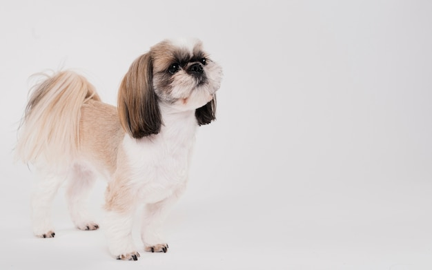 Cute small dog standing Free Photo