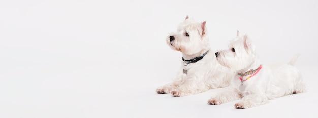 Милые маленькие собачки сидят Premium Фотографии
