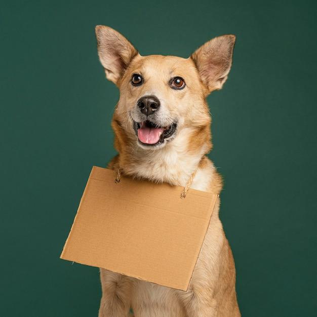 Милый смайлик собака держит пустой знамя Бесплатные Фотографии