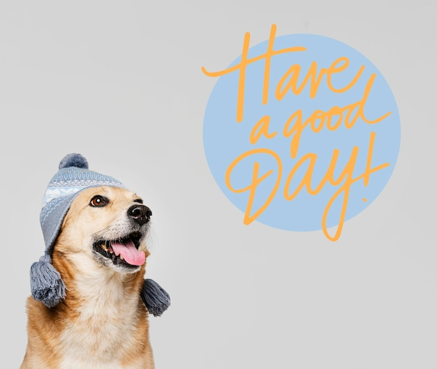 Cane carino faccina che indossa cappello lavorato a maglia Foto Gratuite