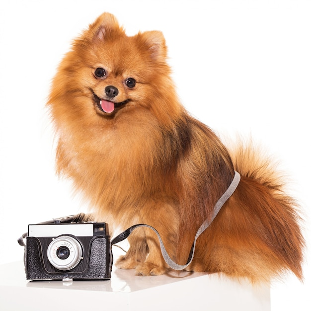 Cute spitz with camera Free Photo