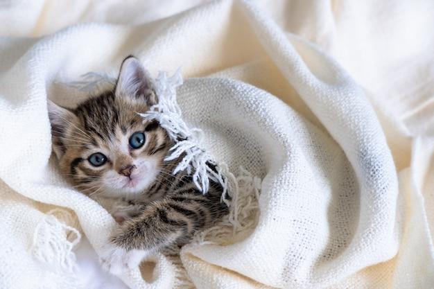 横になっているかわいい縞模様の子猫は、ベッドの上の白い光の毛布を覆われています。カメラ目線。愛らしいペットの概念。 Premium写真