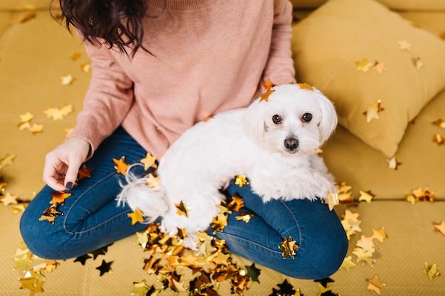 コーチの黄金のティンセルで身も凍るように膝の若い女性を探しているかわいい、甘い小さな白い犬。家の快適さ、ペット、陽気な気分 無料写真