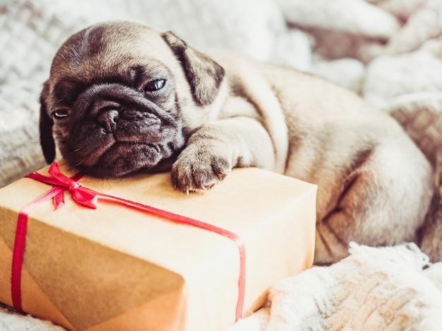 화창한 날에 창 근처 창틀에 누워 귀엽고 달콤한 강아지. 애완 동물 관리 개념 프리미엄 사진