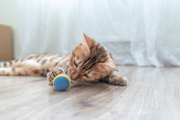 部屋でおもちゃのボールで遊ぶかわいいぶち猫。 Premium写真