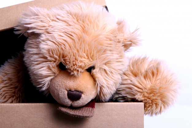 Cute teddy bear in the gift box Free Photo