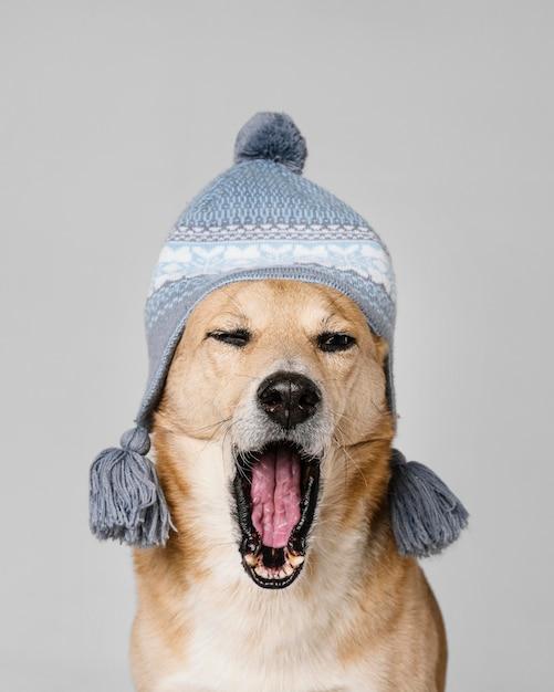 Милая усталая собака в вязаной шапке Бесплатные Фотографии