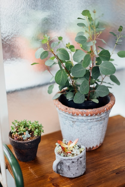 Cute tree pot in cafe Free Photo