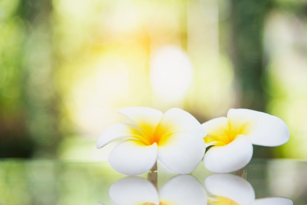 Cute white flower in blurred background Free Photo