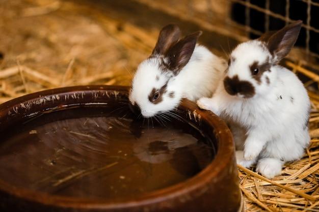 水の近くのかわいい白いウサギ Premium写真
