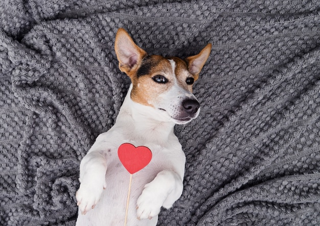 Cute young dog pet with red heart Premium Photo
