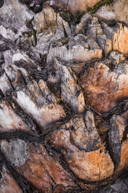 Cuts of old tree bark Free Photo