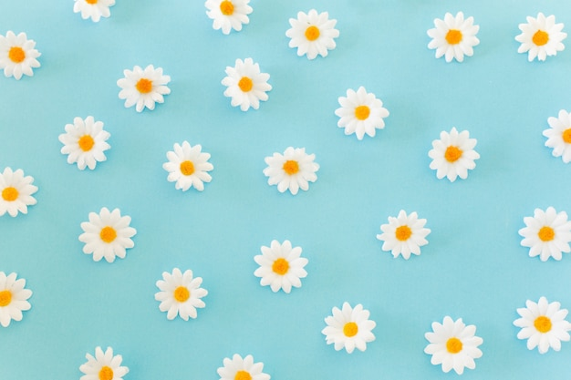 Daisies pattern on blue background Free Photo