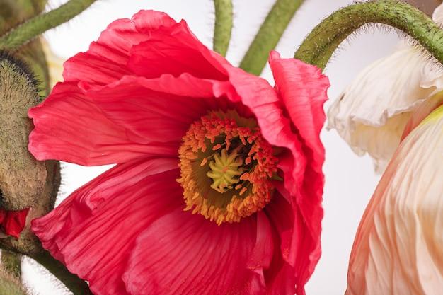 Букет цветов ромашки и мака Бесплатные Фотографии