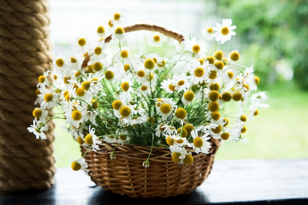 Daisy flowers in the basket. basket with chamomile in the garden. Premium Photo