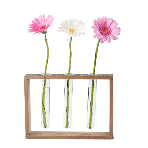 Daisy flowers in test tubes Premium Photo