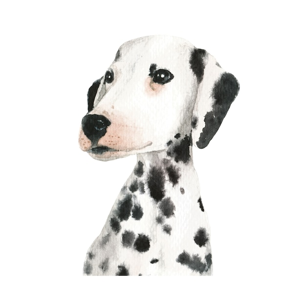 Dalmatian puppy dog watercolor illustration Premium Photo