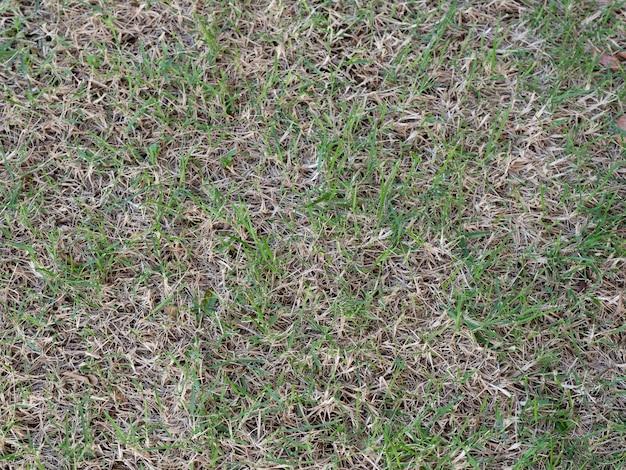 Damage of a green lawn Premium Photo