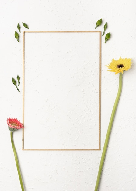 Dandelion flowers with a simplistic frame on white background Free Photo