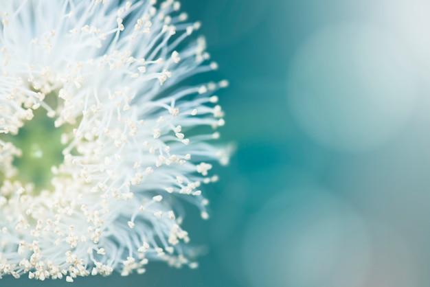 Dandelion seeds Free Photo