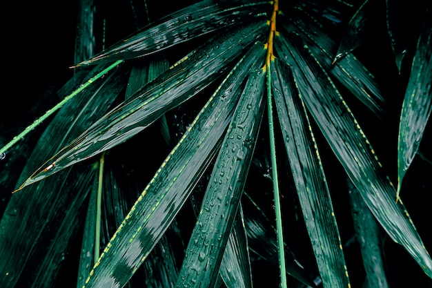 Dark bamboo leaf in tropical jungle nature background Premium Photo