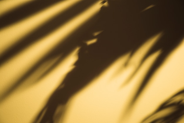 Dark black palm leaves shadow on yellow backdrop Free Photo