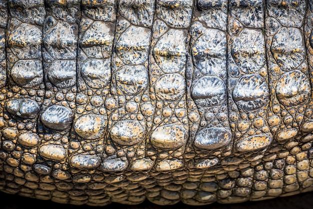 Темно-коричневая кожа крокодила для фона и текстуры Premium Фотографии