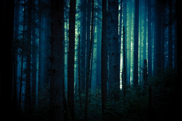 Dark creepy forest Free Photo