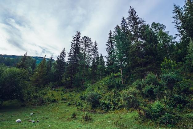 丘の上に古い高い松とトウヒのある濃い緑色の風景 Premium写真