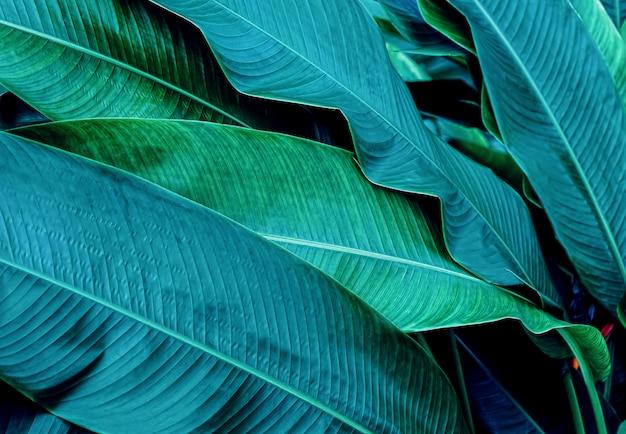 Dark green leaf in tropical jungle nature Premium Photo