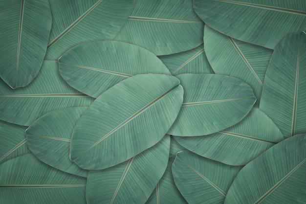Dark Green Leaves Texture Background Natural Leaf Plant For