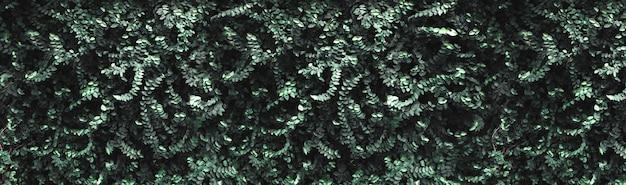 Dark green leaves wall background Premium Photo