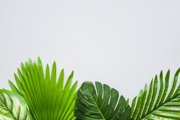 Dark green leaves on white background for writing the text Free Photo