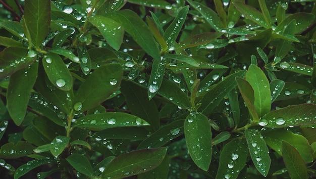 雨上がりの水滴が多い濃い緑色の植物の葉 Premium写真