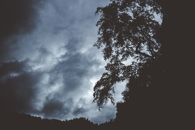 Темная гора с силуэтами деревьев, растущих на краю Бесплатные Фотографии