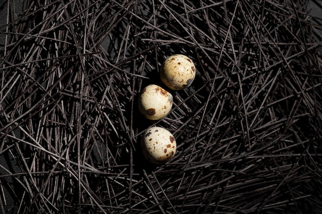 Dark nest with quail eggs Free Photo