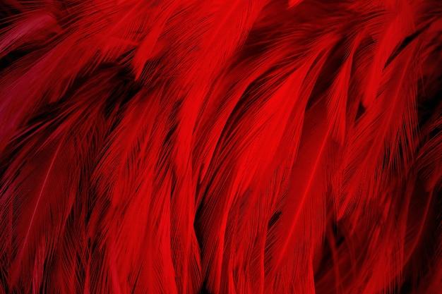 Dark red feather texture background Photo | Premium Download