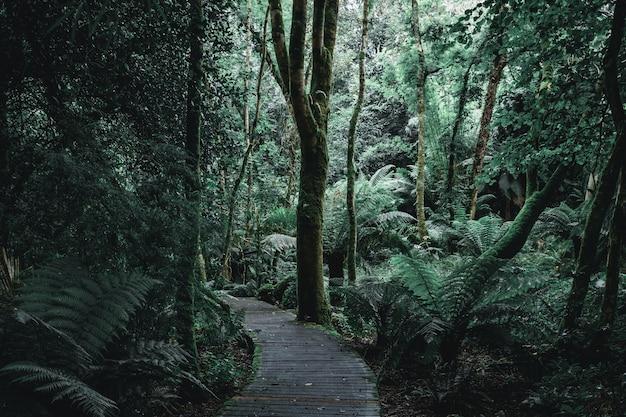 나무 판과 숲 오솔길의 어두운 풍경 무료 사진