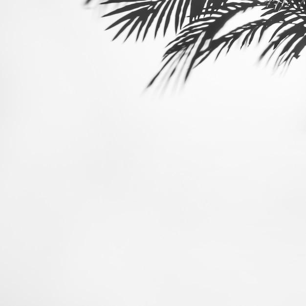 白い背景にヤシの暗い影を葉します。 無料写真