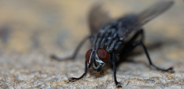 Daytime sitting fly macro photography Premium Photo