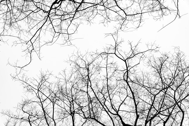 Dead branches Free Photo
