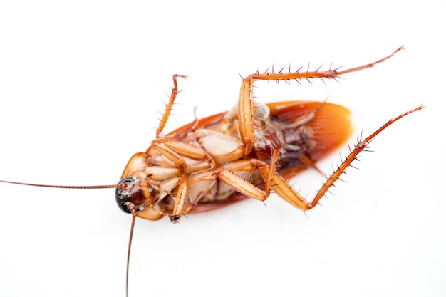 Dead cockroach Premium Photo