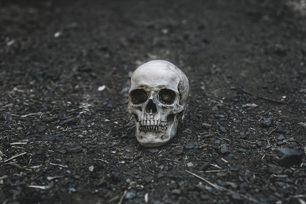 Dead cranium placed on grey soil Free Photo