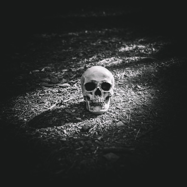 Dead illuminated cranium placed on grey soil Free Photo