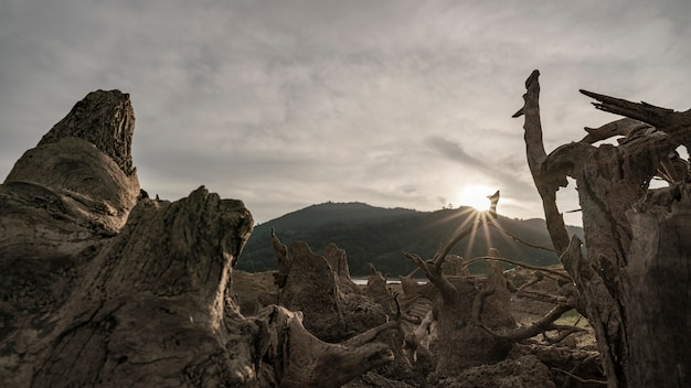 Dead trees in a dried up lake concept weather environment and global warming Premium Photo