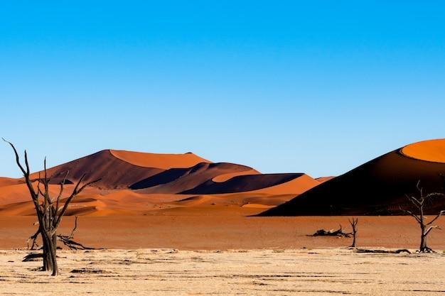 ナミビアのナウブナウクルフト国立公園のデッドヴレイナミビアのソススフレイ-青い空とオレンジ色の砂丘に対する死んだキャメルソーンの木。 無料写真