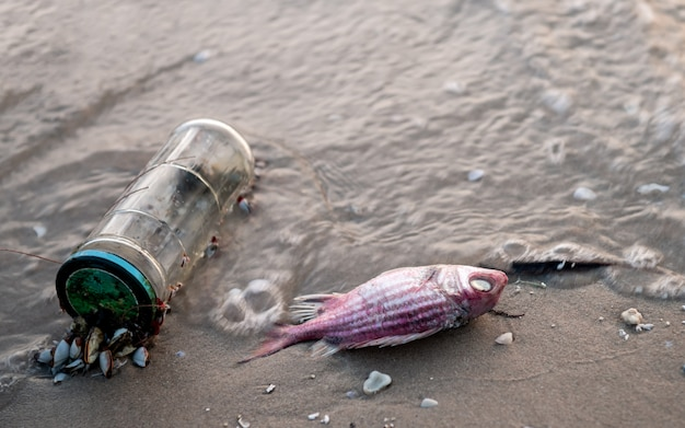 Death fish on the beach. Premium Photo